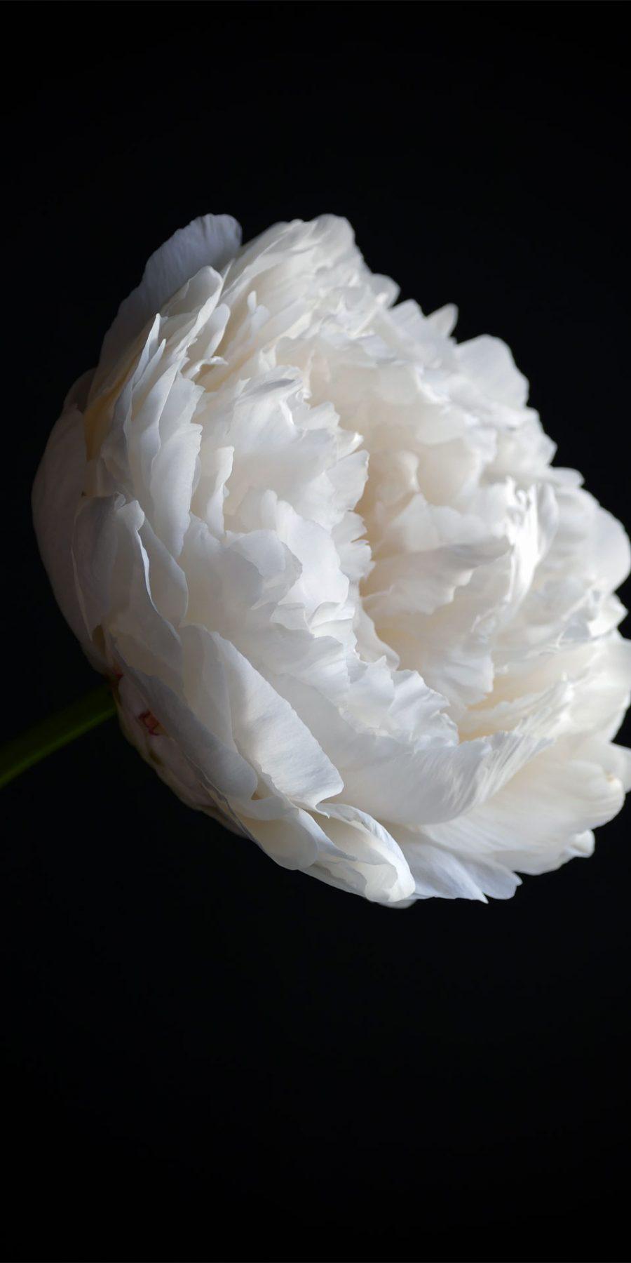 Casa Mia Wald-Michelbach The art of flowers